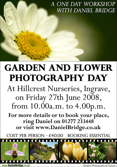 Garden and Flower Photography Workshop, Hillcrest Nurseries, Ingrave, Essex, 27th June 2008