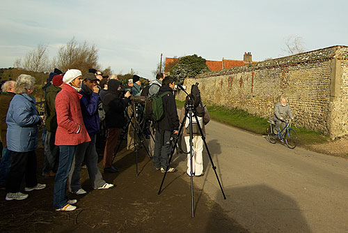 Bird watchers and Twitchers at Cley, Norfolk, to see the White Crowned Sparrow, January 2008