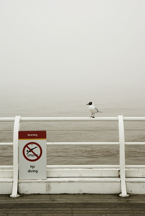 Gull on railing on Cromer Pier in fog, Cromer, Norfolk