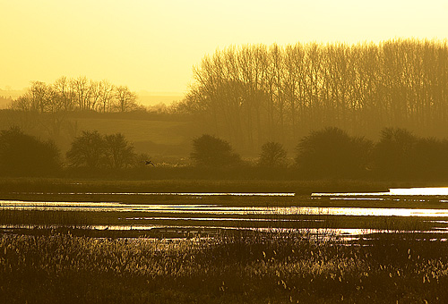 Pink-Footed Geese roost at Holkham, Norfolk, but views across the reed beds are beautiful in themselves.