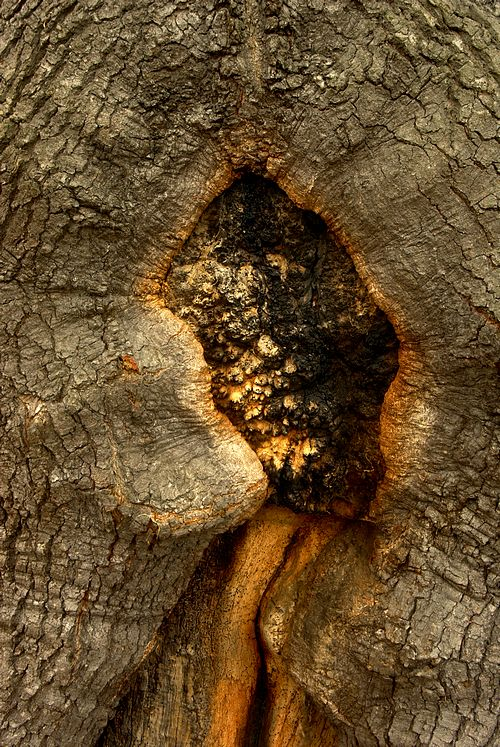 Oak tree bark, taken at Weald Country Park in Brentwood, during a 1-2-1 photography tuition session.
